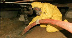 Mold Removal Technician